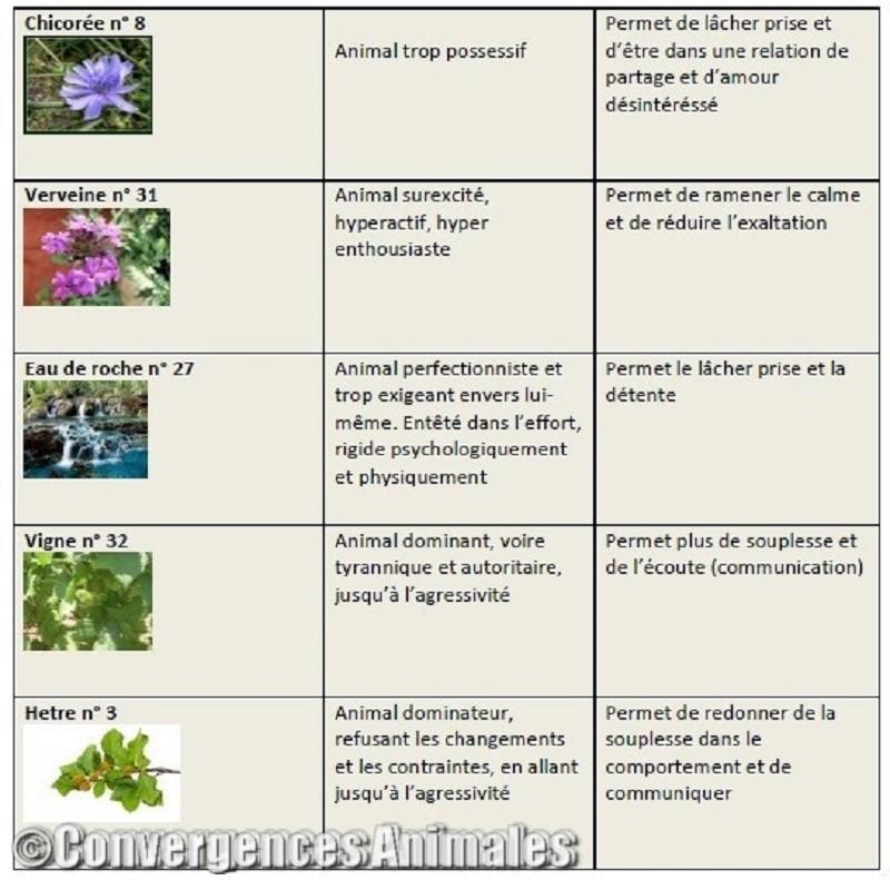 Fleurs De Bach Convergences Animales